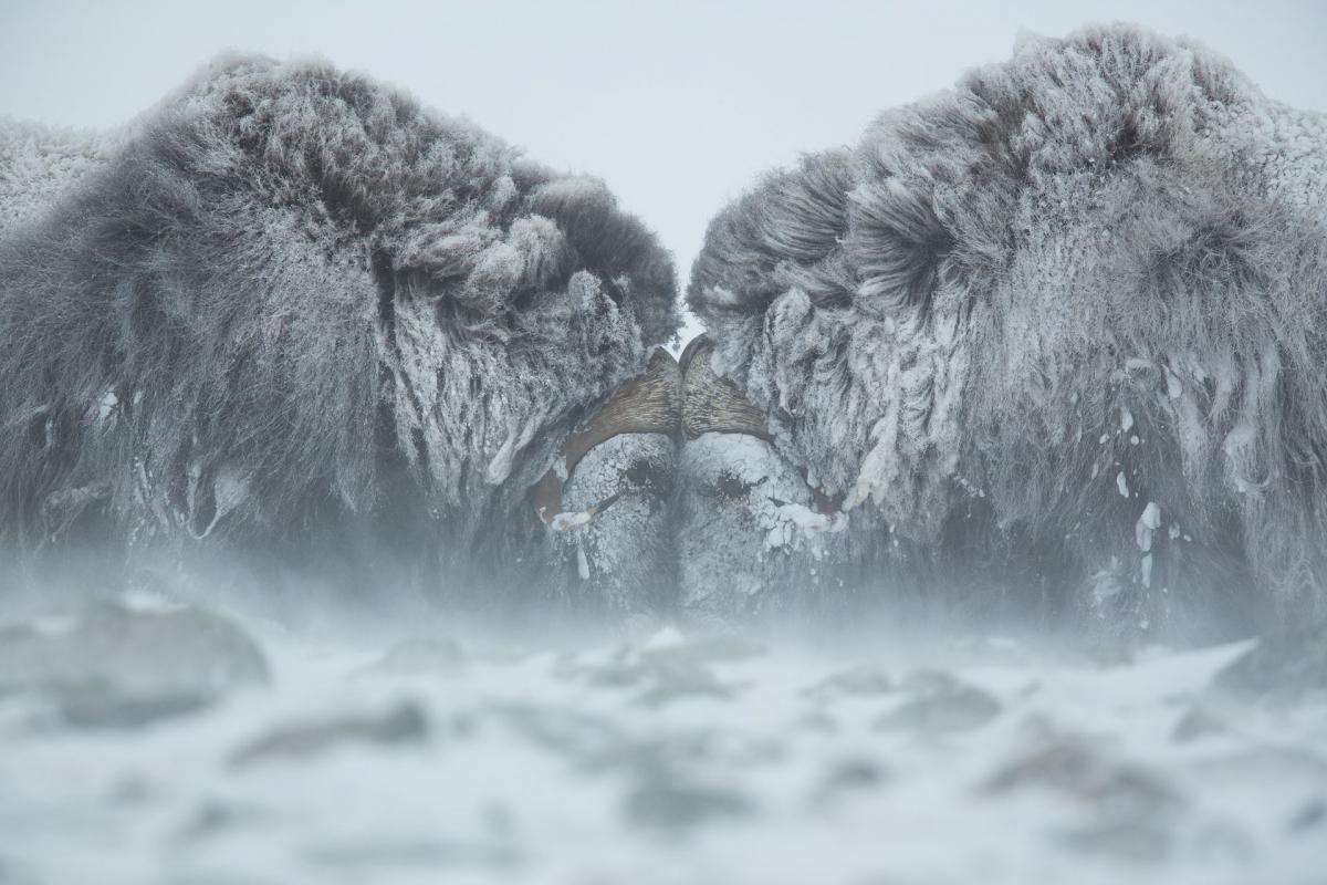 16/10/2018 - Matthew Polvorosa Kline - Duel In The Snow