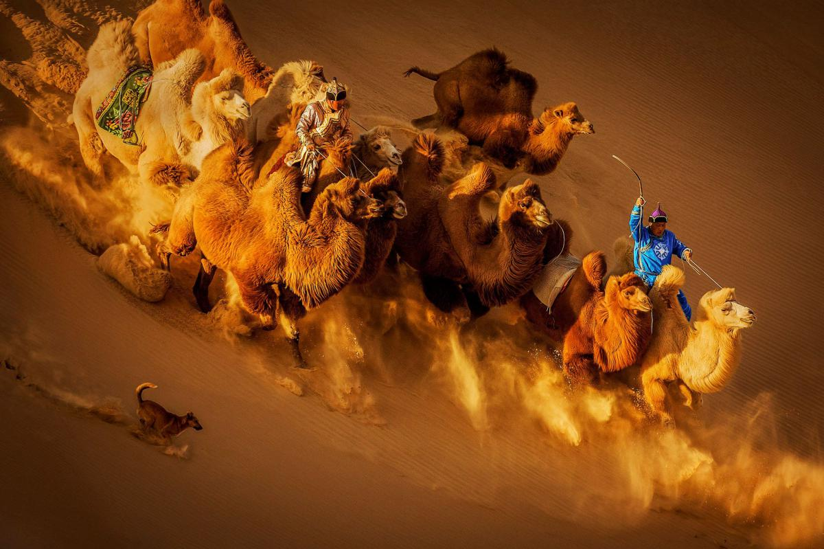 23/10/2018 - Weiguo Hu - Camels In The Desert
