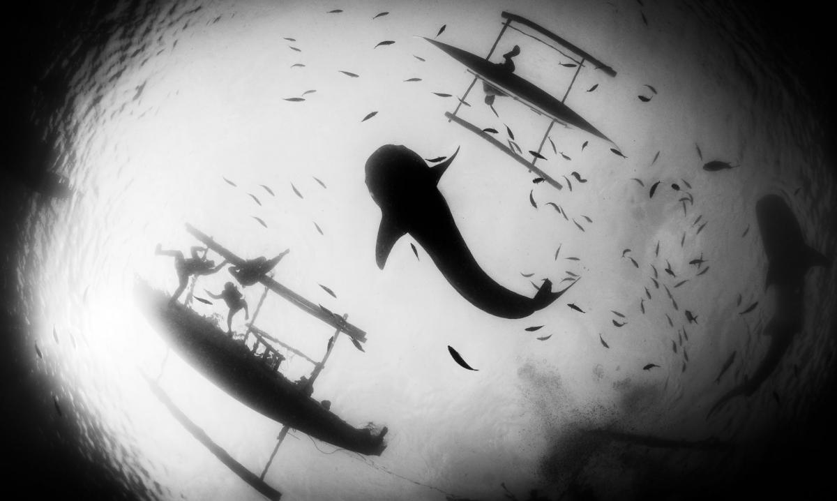 05/11/2018 - Csaba Tokolyi - Whale Shark And Tourists