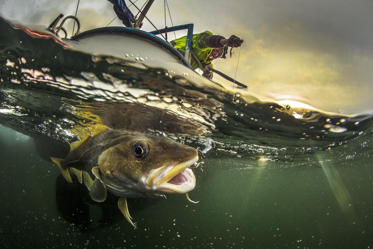 15/11/2018 - Audun Rikardsen - Traditional Coastal Cod Fishery