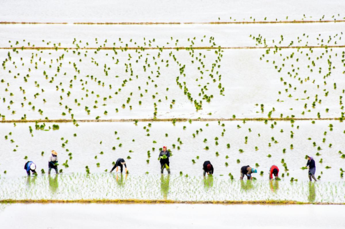 17/04/2019 - Keyvan Jafari - Women Rice Farmers