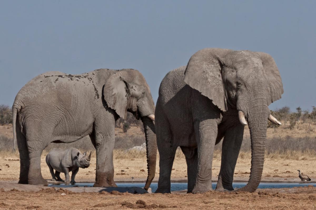 13/05/2019 - Johan J Botha - Rhino And Elephant