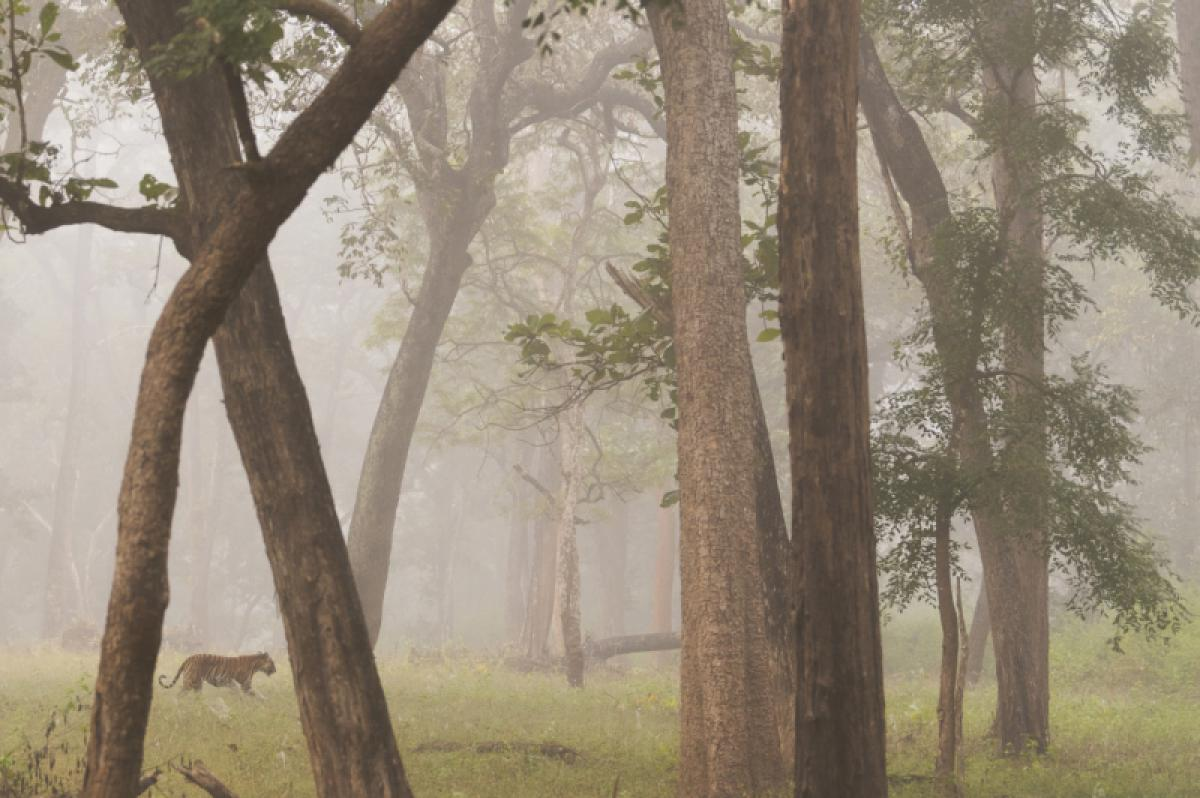 17/05/2019 - Talib Almarri - Walking Between The Fog