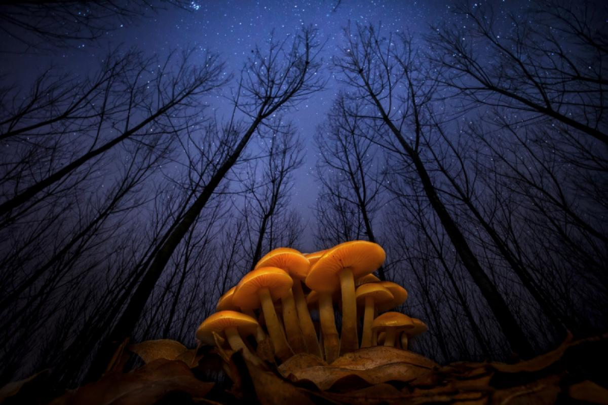 11/06/2019 - Roberto Aldrovandi - The Night Of The Forest