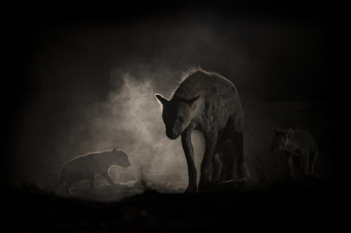19/10/2019 - Jens Cullmann - Hyenas At Night