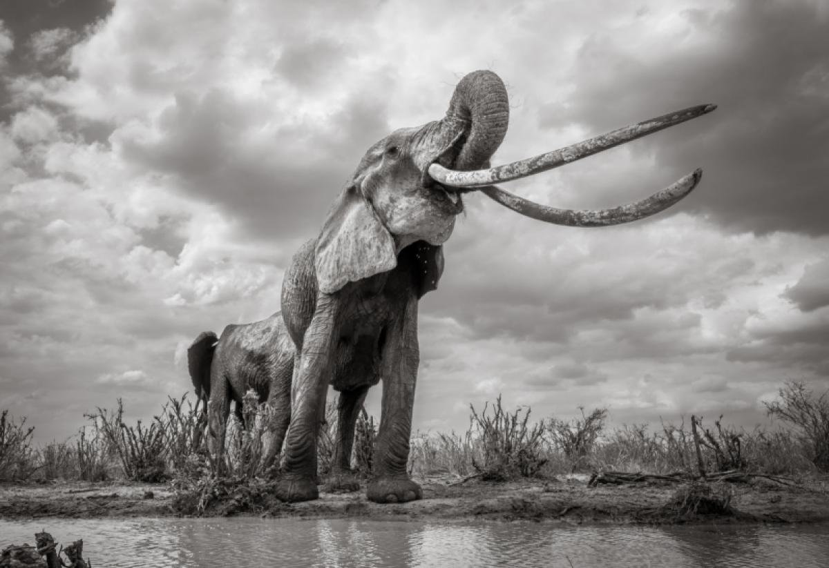 21/10/2019 - William Burrard-lucas - Mammoth