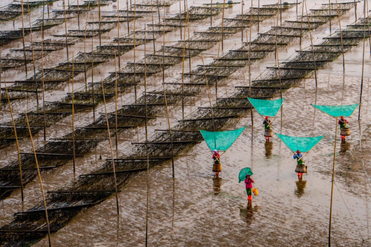 24/10/2019 - Chin Leong Teo - Fishermen Returning Home