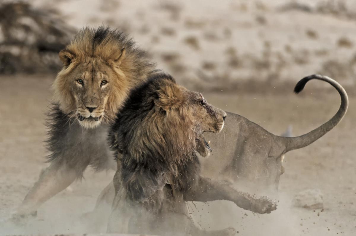 21/01/2020 - Johan J Botha - Territory Clash