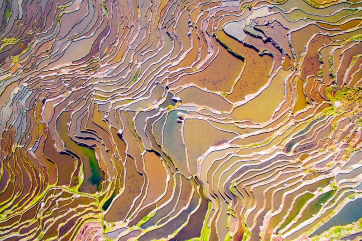23/01/2020 - Feng Han - Colorful Field