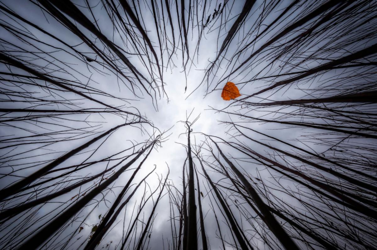 16/03/2020 - Juan Garcia Lucas - Tim Burton Autumn