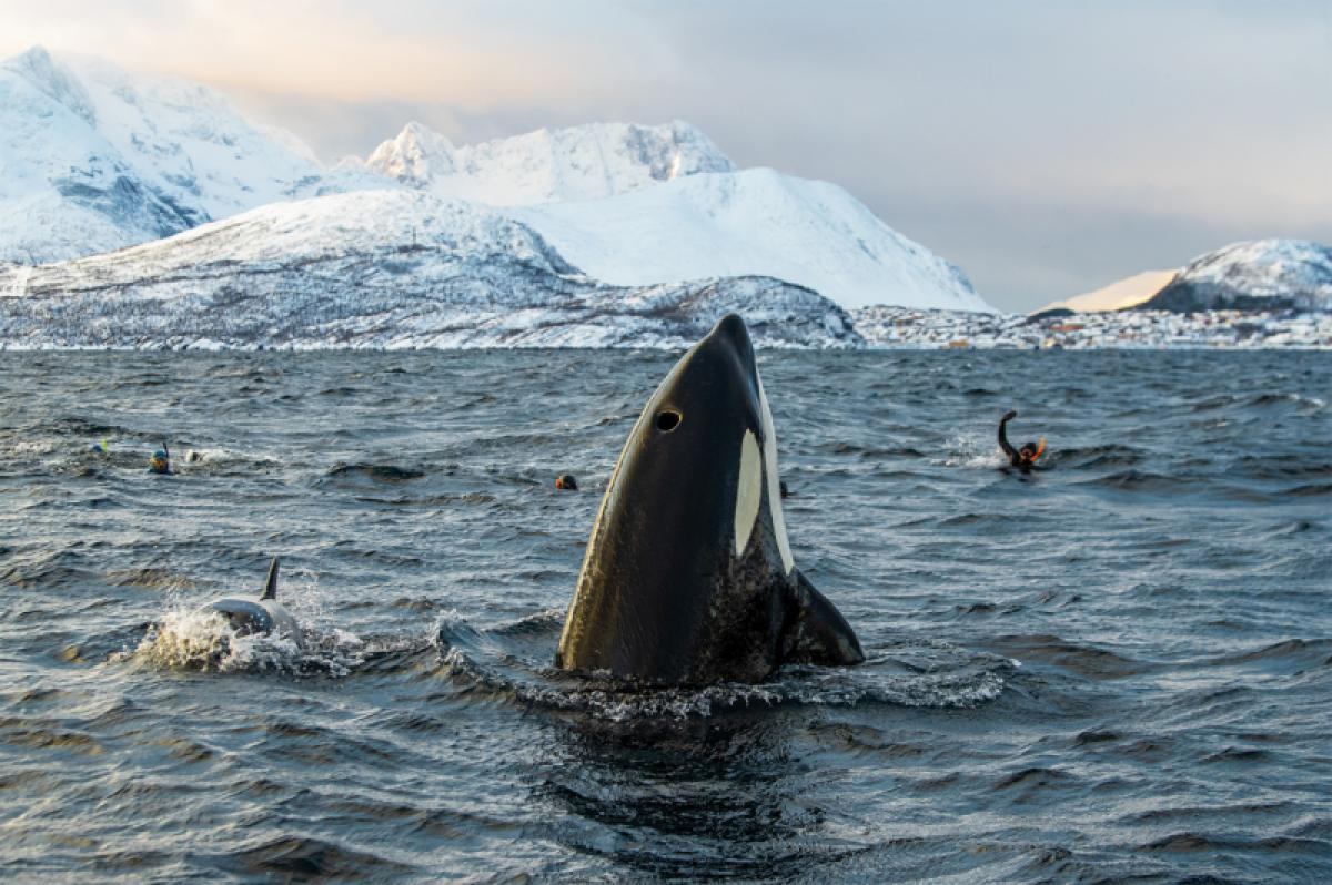 22/03/2020 - Jon Langeland - From Whale Killing To Whale Swimming