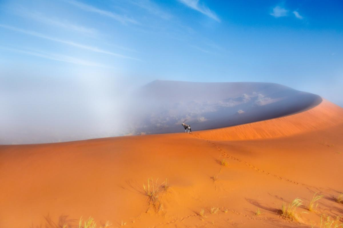 24/03/2020 - Thomas Vijayan - Oryx Up The Dune On A Foggy Day
