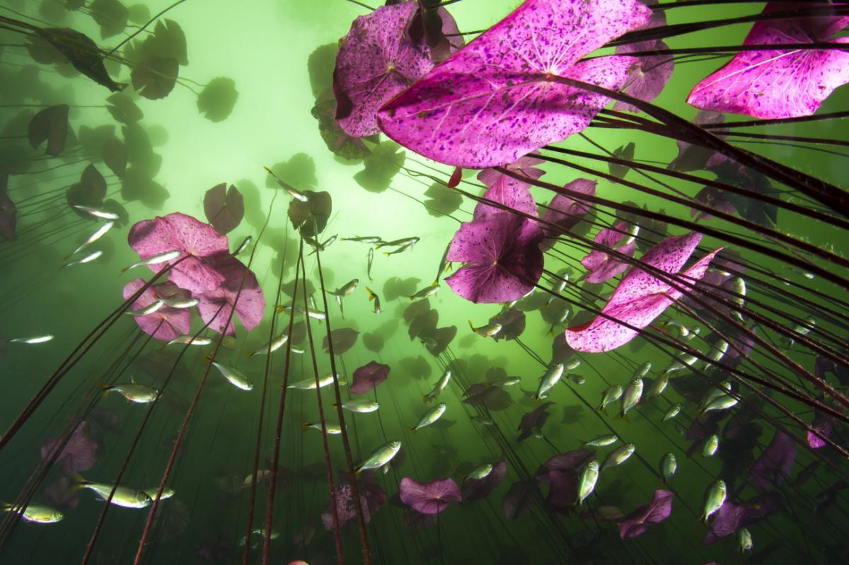 22/12/2020 - Christian Vizl - Water plants and fish at cenote Car Wash.
