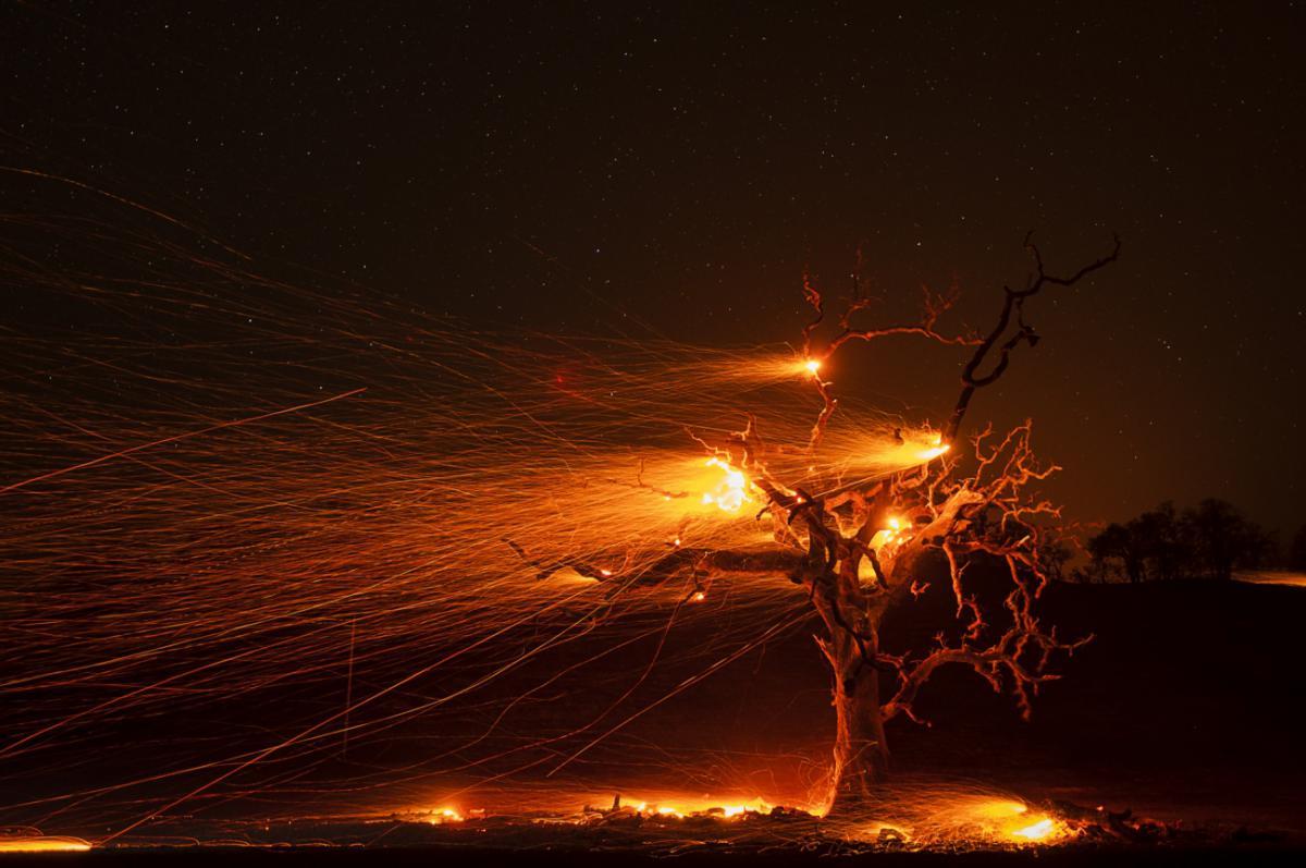31/12/2020 - Paul Kitagaki jr. - Burning Tree