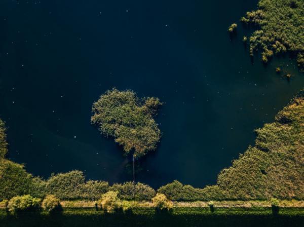 Patryk Morzonek - Tree Or Island?
