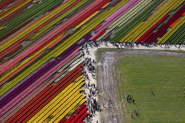 > Joson - Tulips Time
