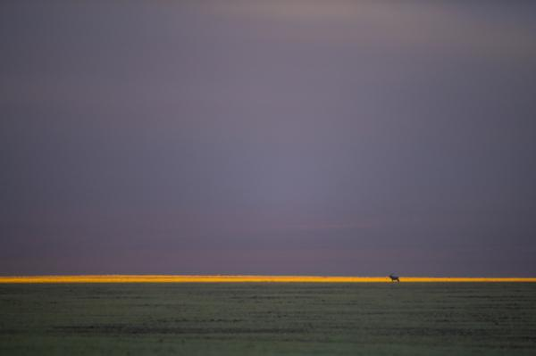 Hannes Lochner - Desert Light
