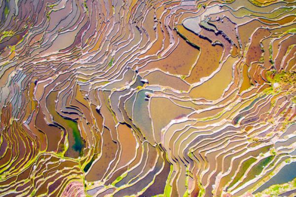 Feng Han - Colorful Field