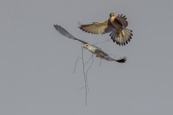 Hannes Lochner - Aerial Battle