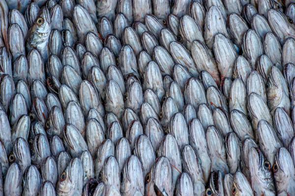 Valentina Bollea - Perfect Fish
