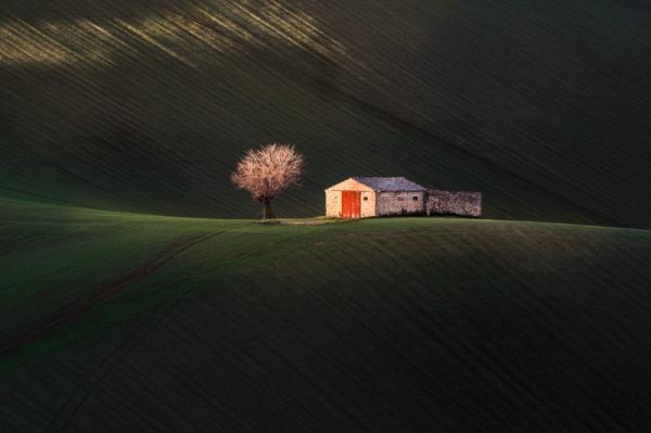 Marco Viviani - In Mezzo Al Verde