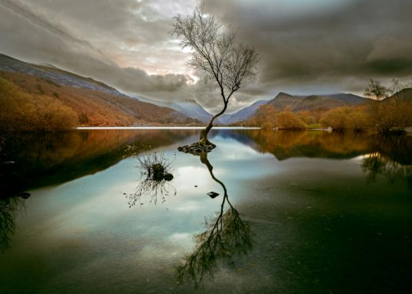 David G Jones - The Lone Tree